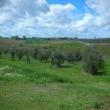 2012_04_21_d_visita_al_borgo_cantine_syrah-191