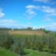 2012_04_21_d_visita_al_borgo_cantine_syrah-193
