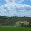 2012_04_21_d_visita_al_borgo_cantine_syrah-219