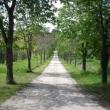 2012_04_21_d_visita_al_borgo_cantine_syrah-222