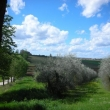 2012_04_21_d_visita_al_borgo_cantine_syrah-223