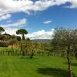 2012_04_21_d_visita_al_borgo_cantine_syrah-224