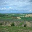 2012_04_22_i_azienda_vinicola_il_fitto-453