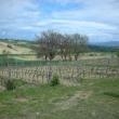2012_04_22_i_azienda_vinicola_il_fitto-454