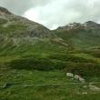 2014_07_27_Ferrari_Tour_Alta_Valtellina_Stelvio_Svizzera_106