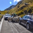 2014_09_13-14_Ferrari_Tour_Passi_Svizzeri_Ghiacciao_Junghfrau_185